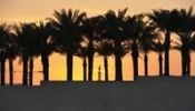 Thumbnail Minaret of a mosque between palm trees, sunset, Doha, Qatar, Persian Gulf, Middle East, Asia