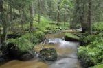 Thumbnail Zwettlbach brook, Gross Gerungs, Waldviertel region, Lower Austria, Austria, Europe