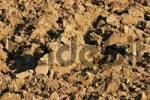 Thumbnail freshly ploughed fertile soil