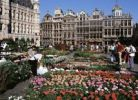 Thumbnail Grand Place with flowers, Brussels, Belgium, Europe