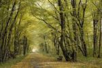 Thumbnail Path in an autumnal wood