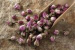 Thumbnail Rose buds (Rosa) with a wooden shovel, on stone surface