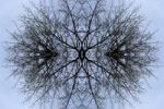 Thumbnail Kaleidoscope of branches