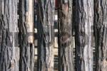 Thumbnail wooden palisade