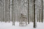 Thumbnail Pine forest with raised hide in winter