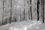 Thumbnail Snowy forest in winter, Canada