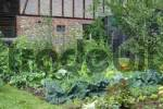 Thumbnail Vegetable garden with zucchini, leek, carrots, cabbage and lettuce
