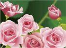 Thumbnail Illustration, roses