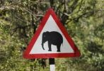 Thumbnail Traffic sign, caution elephants, Tamil Nadu, Tamilnadu, South India, India, South Asia, Asia