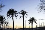 Thumbnail Evening atmosphere, sea, promenade, Avinguda de Gabriel Roca, Palma de Mallorca, Majorca, Balearic Islands, Spain, Europe