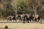 Thumbnail Asian, Asiatic or Indian elephants (Elephas maximus), Rajiv Gandhi National Park, Nagarhole National Park, Karnataka, South India, India, South Asia, Asia