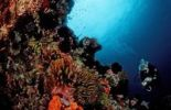 Thumbnail Diver diving at coral reef, Komodo, Indo-Pacific, Indonesia, Southeast Asia