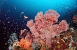 Thumbnail Colorful coral reef, Indian Ocean, Indonesia, Southeast Asia