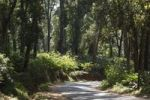 Thumbnail Road through cardamom plantation, Cardamom Hills, Western Ghats, Kerala, India, South Asia, Asia