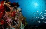 Thumbnail Colourful coral reef with school of fish, Komodo, Indo-Pacific, Indonesia, Southeast Asia, Asia