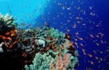 Thumbnail Colorful coral reef, Hurghada, Red Sea, Egypt