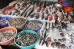 Thumbnail Fish and tiger prawns, king prawns, fish market, Kochi, Fort Cochin, Kerala, South India, South Asia