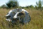 Thumbnail Elephant skull, African elephant (Loxodonta africana), Okavango Delta, Botswana, Africa