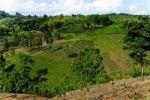 Thumbnail Cultivation, Mae Salong, Thailand, Asia