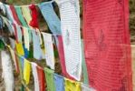 Thumbnail Colorful Tibetan Buddhist prayer flags hanging in rows, Dharamsala, India, Asia
