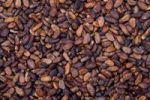 Thumbnail Cocoa beans, La Maison du Cacao, Pointe-Noire, west coast of Basse-Terre, Guadeloupe, French Antilles, Lesser Antilles, Caribbean