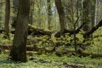 Thumbnail Semi-natural forest with dead wood in spring