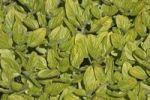 Thumbnail Wild marjoram or Oregano (Origanum vulgare)