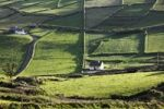 Thumbnail Meadows with walls, Firkeel, Beara Peninsula, Cork, Republic of Ireland, British Isles, Europe