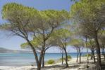 Thumbnail Pine (Pinus pinea) grove on sand dune at turquoise sea, Santa Anna, Pineta, Sardinia, Italy, Europe