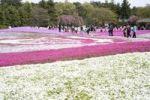 Thumbnail Flower field, Shiba Park, Tokyo, Japan, Asia