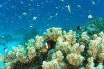 Thumbnail Coral reef, Chuuk, Truk Islands, Micronesia, Pacific Ocean
