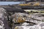 Thumbnail Rocks with lichens, Derrynane Bay, Derrynane National Park, Ring of Kerry, County Kerry, Ireland, British Islands, Europa