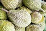 Thumbnail Durian (Durio) fruits, Malaysia