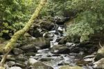 Thumbnail Creek near Torc Waterfall, Killarney National Park, County Kerry, Ireland, British Isles, Europe