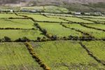Thumbnail Pasture landscape with hedges, Dingle Peninsula, County Kerry, Ireland, British Isles, Europe