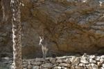 Thumbnail Donkey in front of rock face, Wadi Shab, Oman, Middle East
