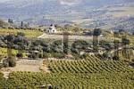 Thumbnail vineyards and olive groves near Avgeniki, Crete, Greece