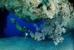 Thumbnail Scuba diver and a coral reef, Maldive Islands, Indian Ocean