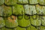 Thumbnail roof tiles with moss