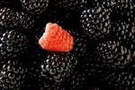 Thumbnail Blackberries (Rubus sectio Rubus) with a single Raspberry (Rubus idaeus)