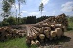 Thumbnail Timber harvesting, timber, spruces lying on the road, cleared area behind, Wipperfuerth, North Rhine-Westphalia, Germany, Europe