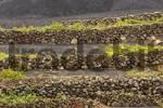 Thumbnail winegrowing in La Geria Lanzarote Canaries