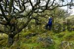 Thumbnail Boy in Whistmans Wood near Two Bridges Dartmoor National Park Devon England