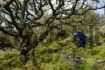 Thumbnail Boy in Whistmans Wood near Two Bridges Dartmoor National Park Devon England