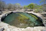 Thumbnail Cenote, a limestone sinkhole, Dzibilchaltun, a Maya archaeological site, Yucatan, Mexico, North America