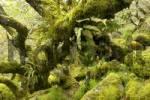 Thumbnail Whistmans Wood near Two Bridges Dartmoor National Park Devon England
