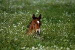 Thumbnail Foal on a pasture