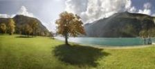 Thumbnail Autumn at Lake Achensee near Achen Church with a maple tree on a green meadow, backlighting, Achensee, Tyrol, Austria, Europe