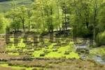 Thumbnail Valley of the river Dart near Two Bridges Dartmoor National Park Devon England