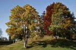 Thumbnail Beech trees (Fagus) in autumn, Tschengla, Vorarlberg, Austria, Europe
